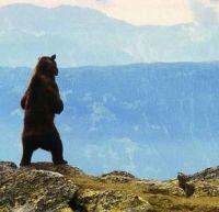 Медведь (1988)