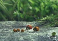 Букашки. Приключение в Долине муравьев (2013)